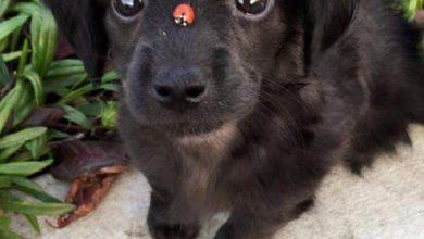 Brauner Kleiner Hund 390x220 - Brauner Kleiner Hund
