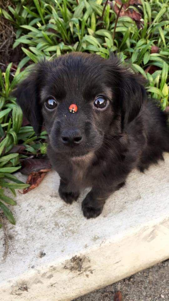 Brauner Kleiner Hund - Brauner Kleiner Hund