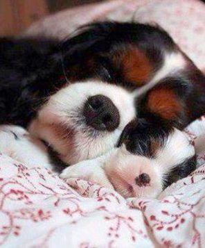 Chinesische Hunderassen Liste - Chinesische Hunderassen Liste