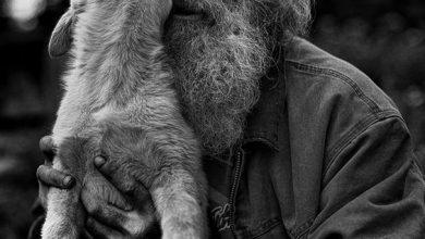 Chinesische Hunderassen Mit Bild 390x220 - Chinesische Hunderassen Mit Bild