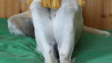 Coole Bilder Von Hunden Für Facebook 390x220 - Coole Bilder Von Hunden Für Facebook