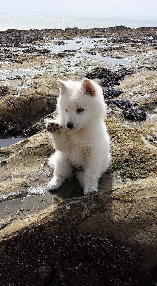 Coole Bilder Von Hunden Kostenlos Herunterladen - Coole Bilder Von Hunden Kostenlos Herunterladen