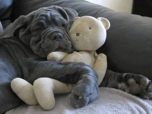 Coole Bilder Von Hunden Kostenlos - Coole Bilder Von Hunden Kostenlos