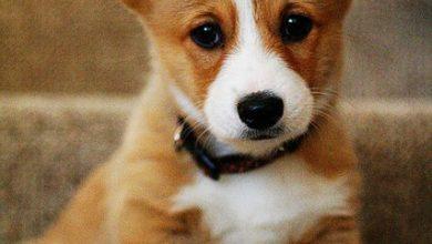 Coole Hunde Bilder Kostenlos 390x220 - Coole Hunde Bilder Kostenlos