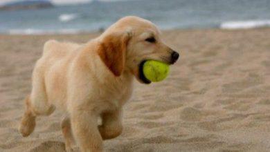 Coole Hunde Bilder Kostenlos Herunterladen 390x220 - Coole Hunde Bilder Kostenlos Herunterladen