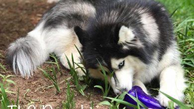 Coole Hundebilder Für Facebook 390x220 - Coole Hundebilder Für Facebook
