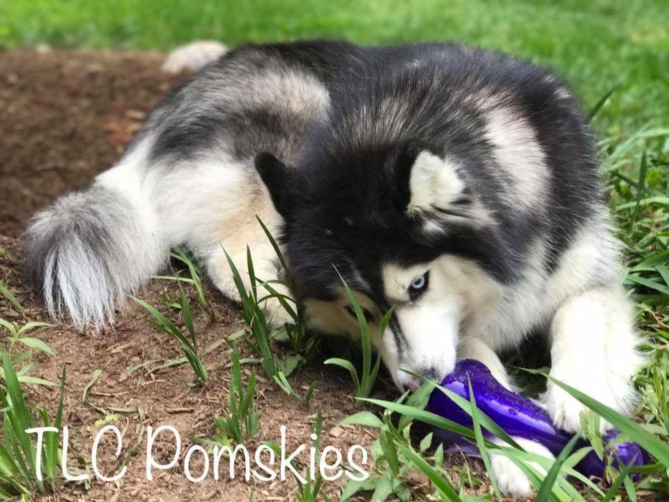 Coole Hundebilder Für Facebook - Coole Hundebilder Für Facebook