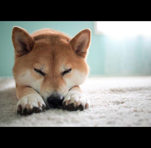 De Hunderassen - De Hunderassen