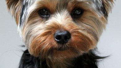 Der Hässlichste Hund 390x220 - Der Hässlichste Hund