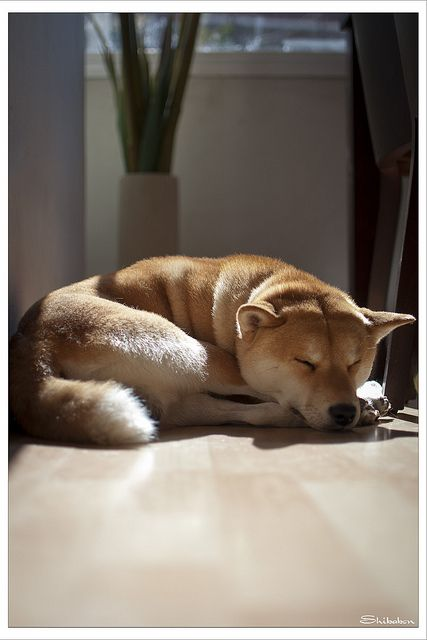 Der Hässlichste Hund Der Welt - Der Hässlichste Hund Der Welt