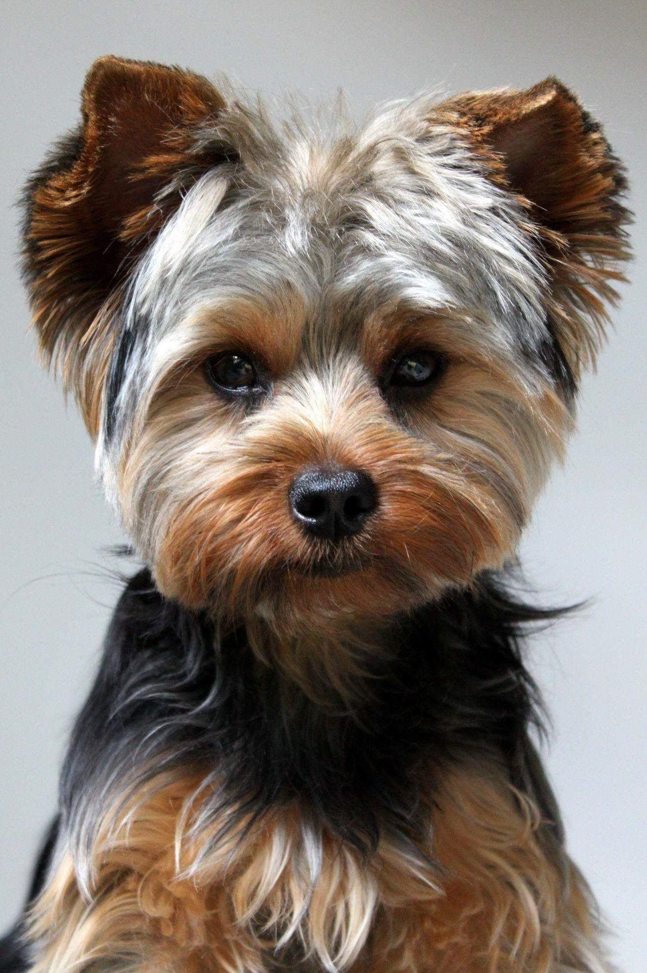 Der Hässlichste Hund - Der Hässlichste Hund