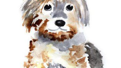 Der Hund Bilder Für Facebook 390x220 - Der Hund Bilder Für Facebook