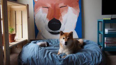 Der Hund Bilder Kostenlos 390x220 - Der Hund Bilder Kostenlos