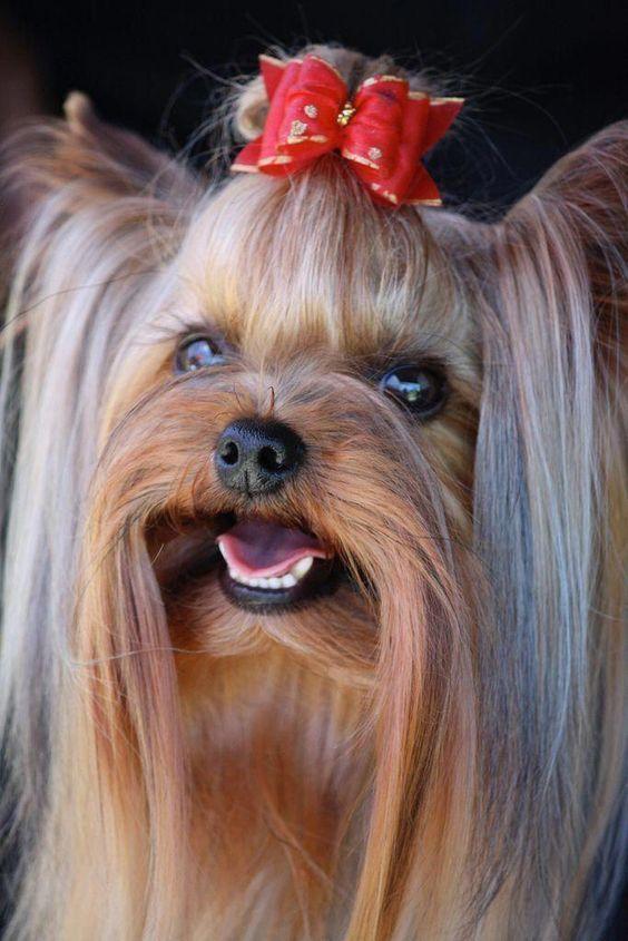Der Hund Bilder Kostenlos Herunterladen - Der Hund Bilder Kostenlos Herunterladen