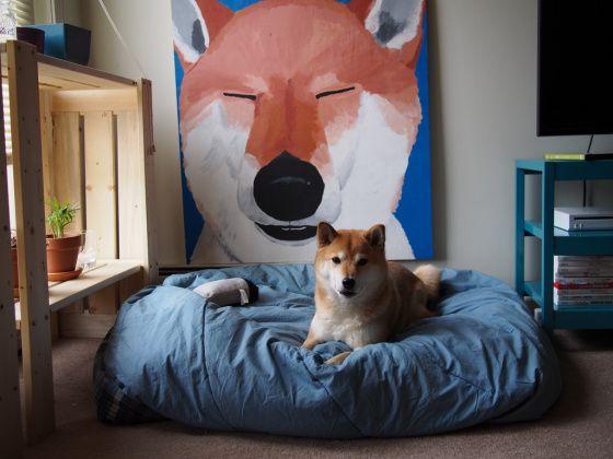 Der Hund Bilder Kostenlos - Der Hund Bilder Kostenlos