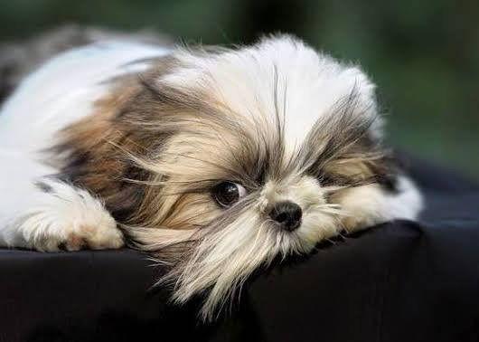 Der Hund Bilder - Der Hund Bilder