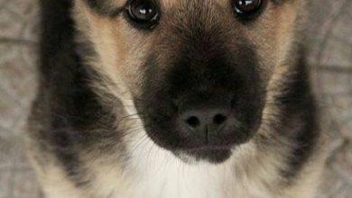 Deutsche Hunderassen Bilder Für Facebook 390x220 - Deutsche Hunderassen Bilder Für Facebook