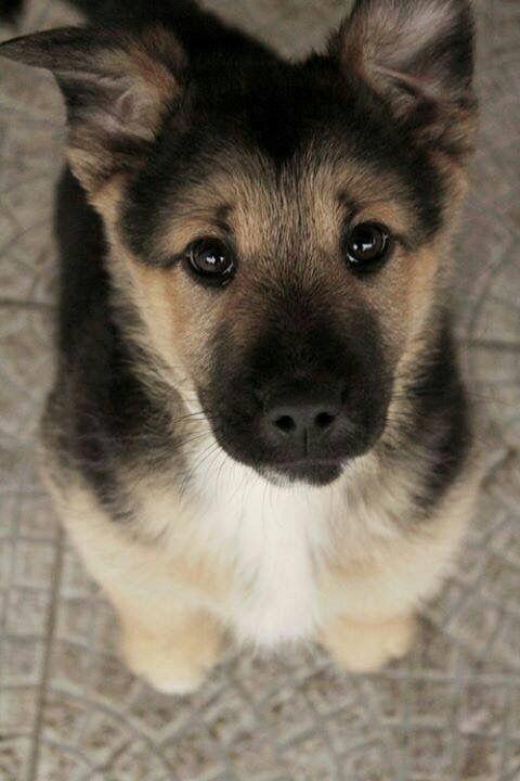 Deutsche Hunderassen Bilder Für Facebook - Deutsche Hunderassen Bilder Für Facebook