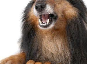 Deutsche Jagdhunde Bilder Für Facebook 300x220 - Deutsche Jagdhunde Bilder Für Facebook