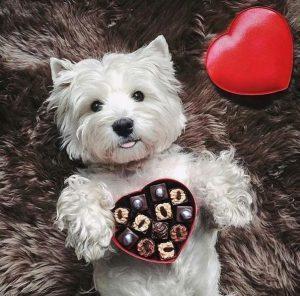 Die Schönsten Hundebilder Für Facebook 300x296 - Die Schönsten Hundebilder Für Facebook