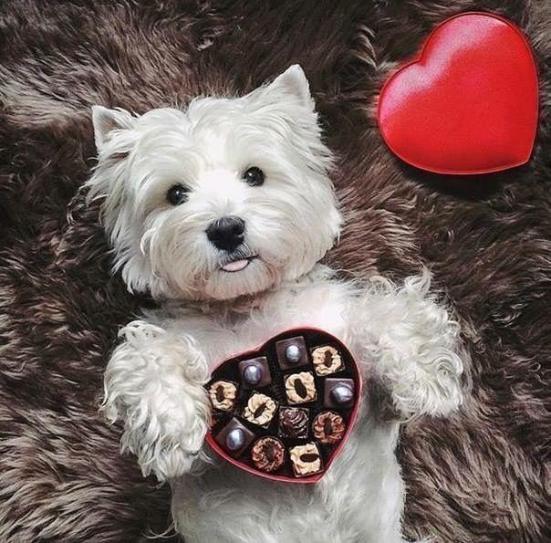 Die Schönsten Hundebilder Für Facebook - Die Schönsten Hundebilder Für Facebook