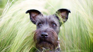 Die Schönsten Hundebilder Kostenlos 390x220 - Die Schönsten Hundebilder Kostenlos