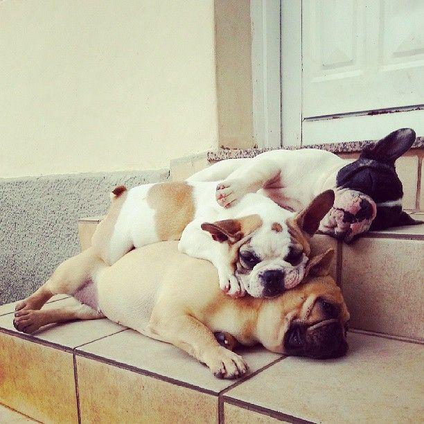 Diverse Hunderassen - Diverse Hunderassen