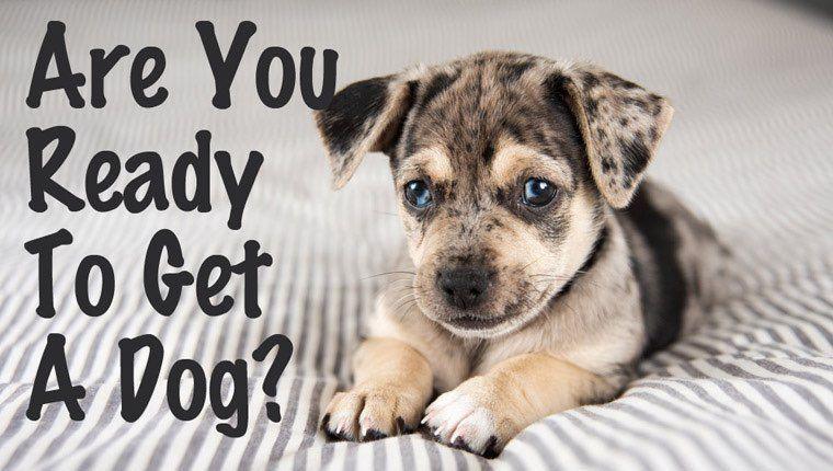 Einreisebestimmungen Hund - Einreisebestimmungen Hund