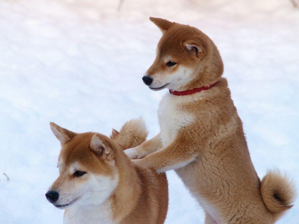 Fotograf Hund - Fotograf Hund