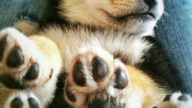 Fotos Hundewelpen 390x220 - Fotos Hundewelpen