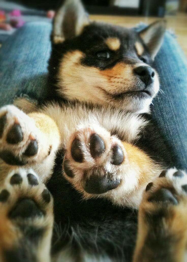 Fotos Hundewelpen - Fotos Hundewelpen