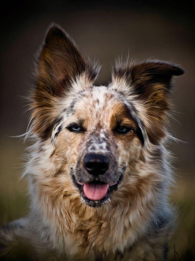 Fotos Von Hundewelpen - Fotos Von Hundewelpen