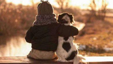 Französische Hunderassen Bilder Für Facebook 390x220 - Französische Hunderassen Bilder Für Facebook