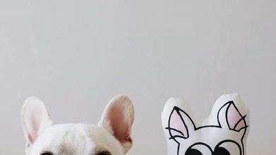 Französische Hunderassen Bilder Für Whatsapp 390x220 - Französische Hunderassen Bilder Für Whatsapp
