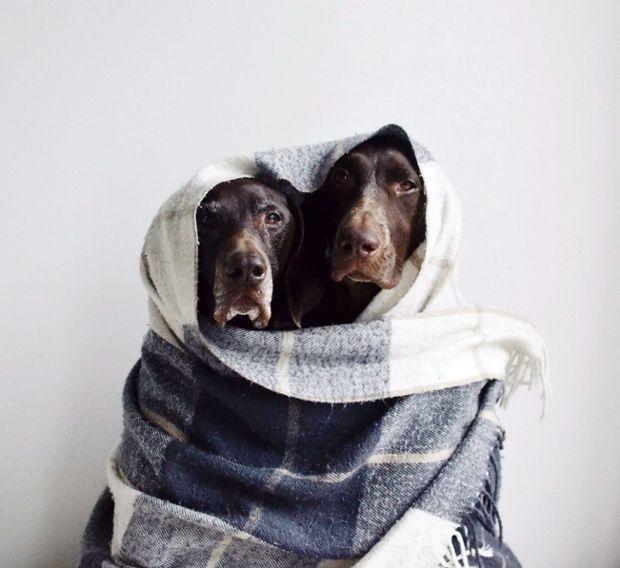 Französischer Schäferhund Bilder - Französischer Schäferhund Bilder
