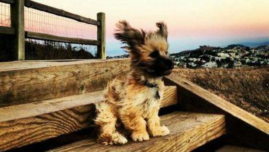 Gemalte Hunde Bilder Für Facebook 390x220 - Gemalte Hunde Bilder Für Facebook