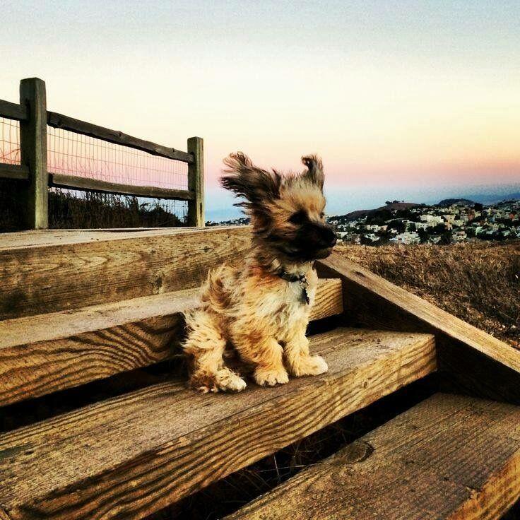 Gemalte Hunde Bilder Für Facebook - Gemalte Hunde Bilder Für Facebook