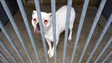 Gemalte Hunde Bilder Kostenlos 390x220 - Gemalte Hunde Bilder Kostenlos