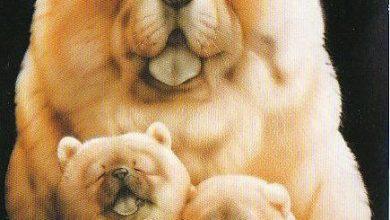 Gemalte Hunde Bilder Kostenlos Herunterladen 390x220 - Gemalte Hunde Bilder Kostenlos Herunterladen