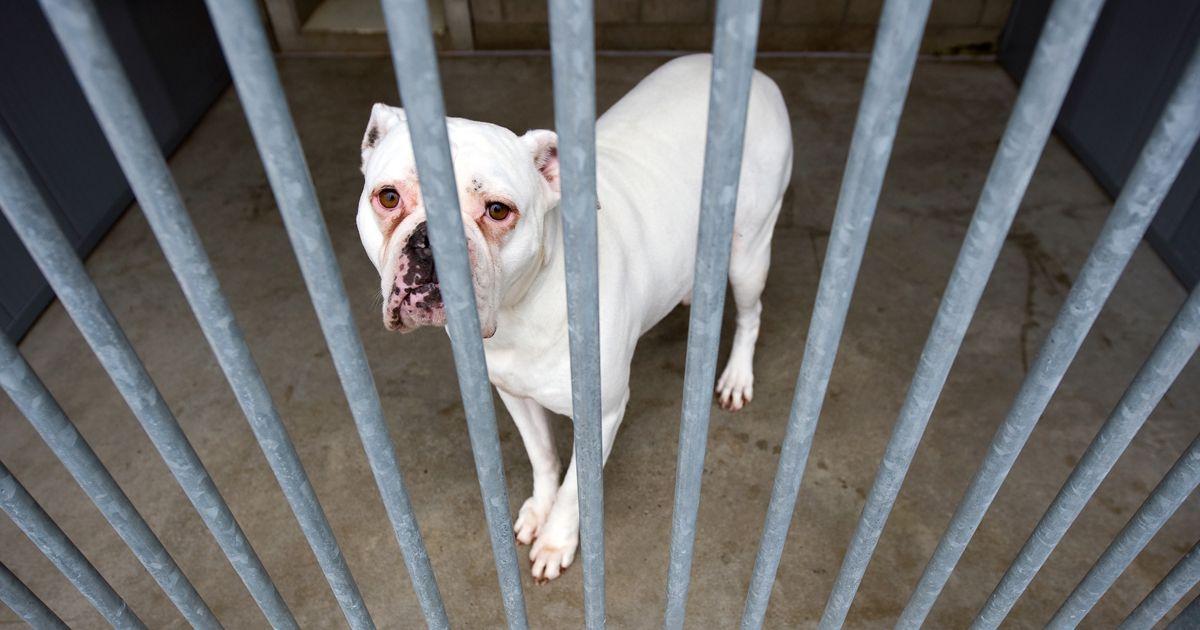 Gemalte Hunde Bilder Kostenlos - Gemalte Hunde Bilder Kostenlos