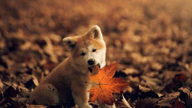 Gezeichnete Hunde Bilder 390x220 - Gezeichnete Hunde Bilder