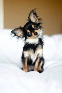 Gezeichnete Hunde Bilder Kostenlos Herunterladen 201x300 - Gezeichnete Hunde Bilder Kostenlos Herunterladen