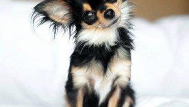 Gezeichnete Hunde Bilder Kostenlos Herunterladen 390x220 - Gezeichnete Hunde Bilder Kostenlos Herunterladen