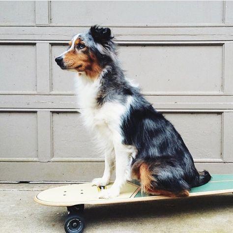 Google Hundebilder Für Whatsapp - Google Hundebilder Für Whatsapp