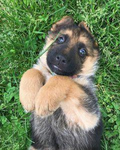 Google Hundebilder Kostenlos 240x300 - Google Hundebilder Kostenlos