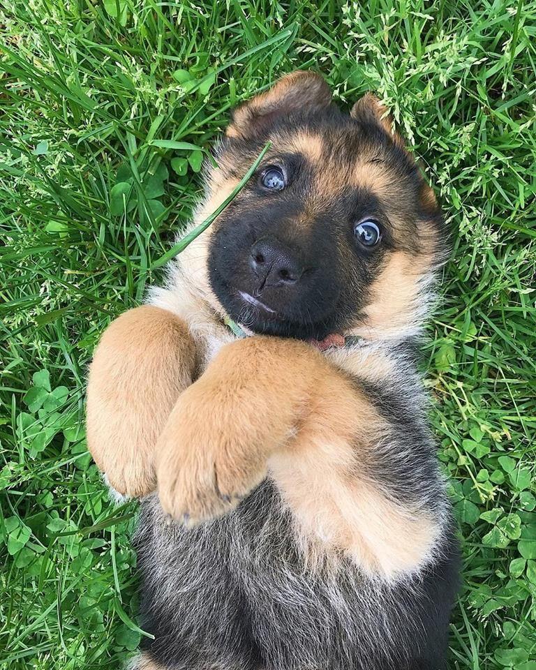 Google Hundebilder Kostenlos - Google Hundebilder Kostenlos