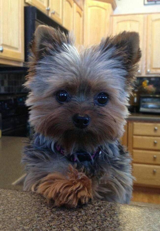 Grauer Kleiner Hund - Grauer Kleiner Hund
