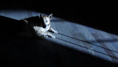 Große Hunde Bilder 390x220 - Große Hunde Bilder