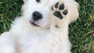 Große Hunde Bilder Für Facebook 390x220 - Große Hunde Bilder Für Facebook