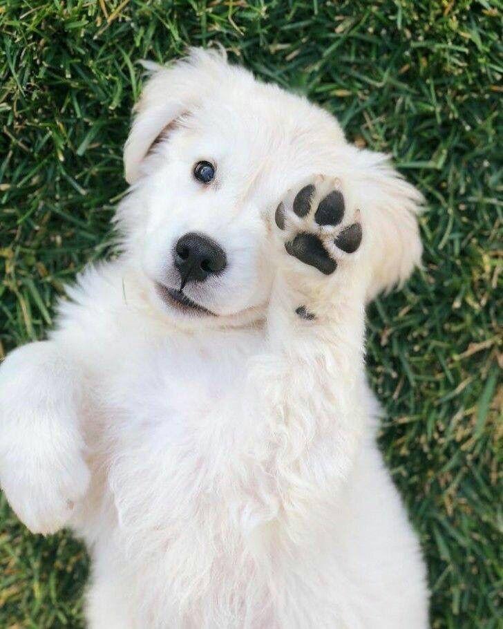 Große Hunde Bilder Für Facebook - Große Hunde Bilder Für Facebook